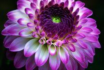 цветочки для вдохновения