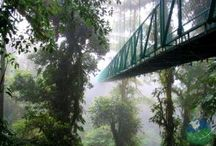 Monteverde in Costa Rica / Monteverde is famous for its cloud forests. Have a high flying adventure on the zipline or hanging bridge tours. You are sure to love every bit of it.