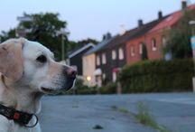 Labrador / Photography