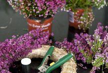 Blomster dekorationer m.m.