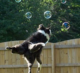 DOGS...Border Collies / by Cheri Hopkins