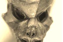Ufologie