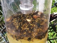 Insect solutions