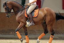 horse tack colours