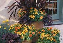 Rośliny w pojemnikach