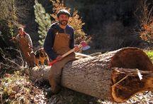 Filiera bosco - legno