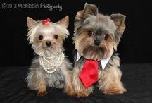 Snoop doggy dog!