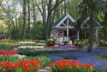 Queen at the Keukenhof Holland! / In the heart of the Keukenhof, near the Oranje Nassau pavilion, you'll find our flower bulb shop and colourful garden, which shows off the varieties from our range. Our enthusiastic and expert sales team is available to help you every day at the Keukenhof! Just like in our online store, there's something for everyone at our flower bulb shop at the Keukenhof, including a wide selection of Amaryllis, which you can purchase and take home with you on the day.
