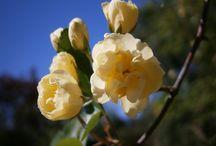 ]Fleur / My Flower Photo's.