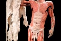 Gunther von Hagens' Body Worlds / Una raccolta di numerose foto delle opere d'arte di Gunther von Hagens,  l'anatomopatologo tedesco inventore della plastinazione e autore delle mostre intitolate Körperwelten (Body World), in cui espone i corpi umani e animali da lui (ri)elaborati in varie pose grazie al suo rivoluzionario processo...