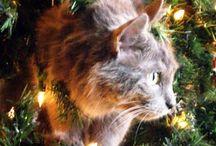 Karácsony cica