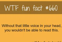 WFT fun fact