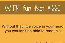 WFT fun fact