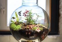 Nature - Gardens - Terrarium