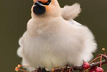 Birds / by Connie van den Bos