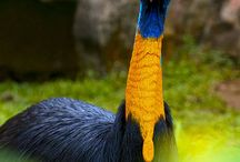 iné vtáctvo