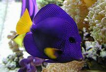vissen/fishes