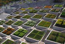 Telhado ecologico