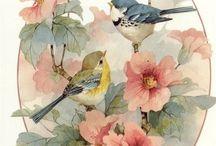 Estampas de pássaros