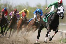 Sporty koně