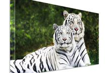 Canvas Print / We do Canvas Prints and poster print with highest quality printing