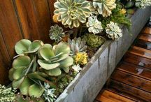Succulent Secrets / My obsessions with succulents
