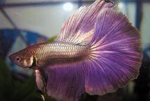Freshwater aquariums and fish