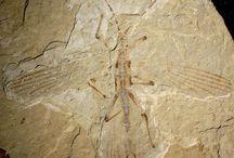 60. Fossielen / Heeeeeel oud