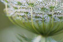 F L O W E R S / Flowers, plants and beautifulness
