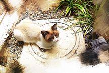 Cats / Tokyo stray cats / by Keiji Nakamoto