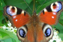 Schmetterlinge / Schöne Schmetterlinge