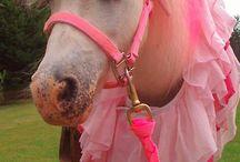 Voor kleine paardenmeisjes!