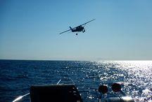 Avion de repérage pour garantir de trouver des dauphins lors de nos sorties