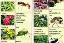 отпугнут насекомых