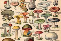 грибы и грибочки