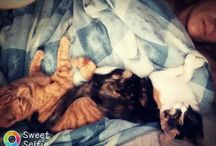 οι γάτες μου...αυτα Τα αστεία πλάσματα...