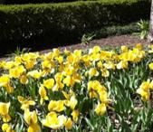 Spring in Savannah / Warmer weather, flowers blooming, what a perfect time to visit and explore Savannah!