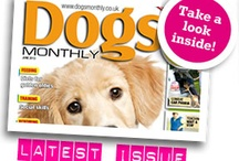 Dog magazines / Confession time.....we read them all!!!!