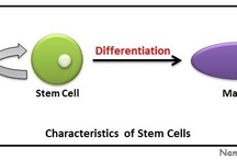 Stem Cells Related Diagrams