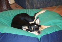 Maremma Sheepdog / Maremmas on lovely pet bean beds from Barka Parka