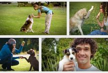 Dog training online review