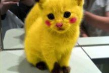 chat pokemon