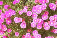 nature / flora e fauna