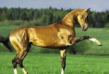 Horses yoga