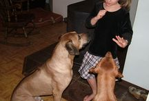 Training a Ridgeback puppy