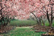 Árvores Lindas / algumas árvores maravilhosas que DEUS nos deu.