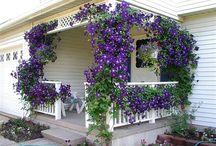 Частный дом фасад и двор
