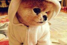 Boo,het schattigste hondje.<3