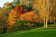 Autumn in the Gardens / Autumn is a spectacular time at Castle Hill. Come and visit us.
