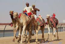 Dubai-Travel Destinations